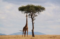 Best African Wildlife Parks
