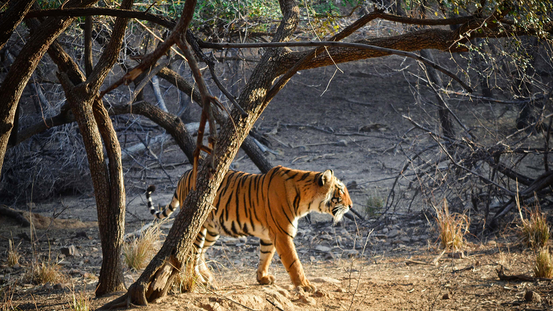 Ranthambhore National Park, Rajasthan